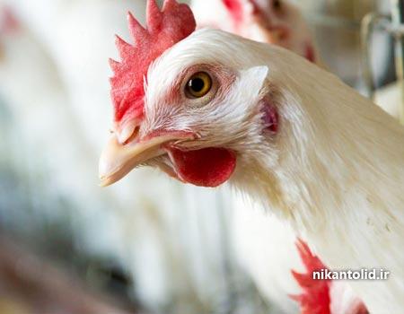 کربنات کلسیم, کربنات کلسیم خوراک طیور, کربنات کلسیم مرغداری, کربنات کلسیم خوراکی,