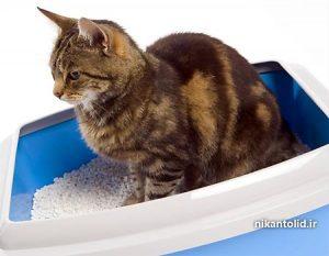 خاک بستر, بنتونیت بستر, خاک گربه, خاک بستر حیوانات,