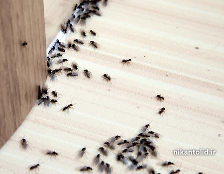 آهک برای حشرات